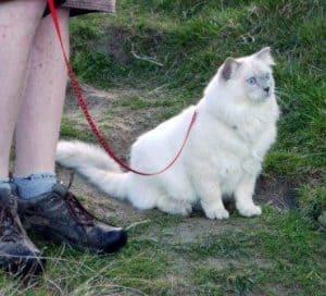 Jaran on a walk