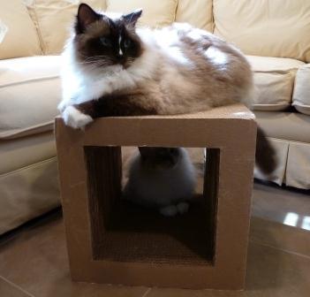 Cardboard Cat Scratcher Cube