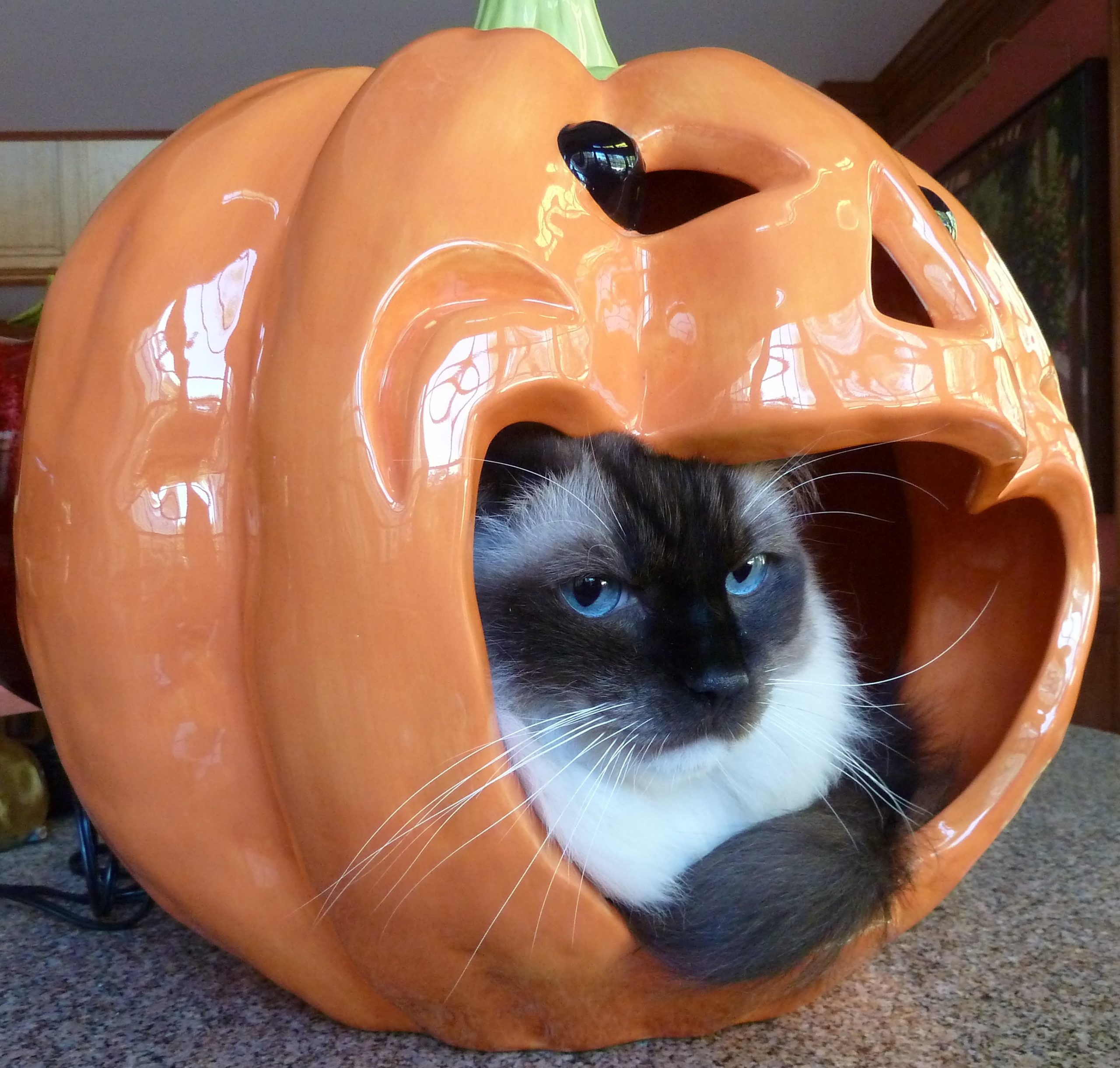 Halloween Pumpkin and Caymus Whiskers