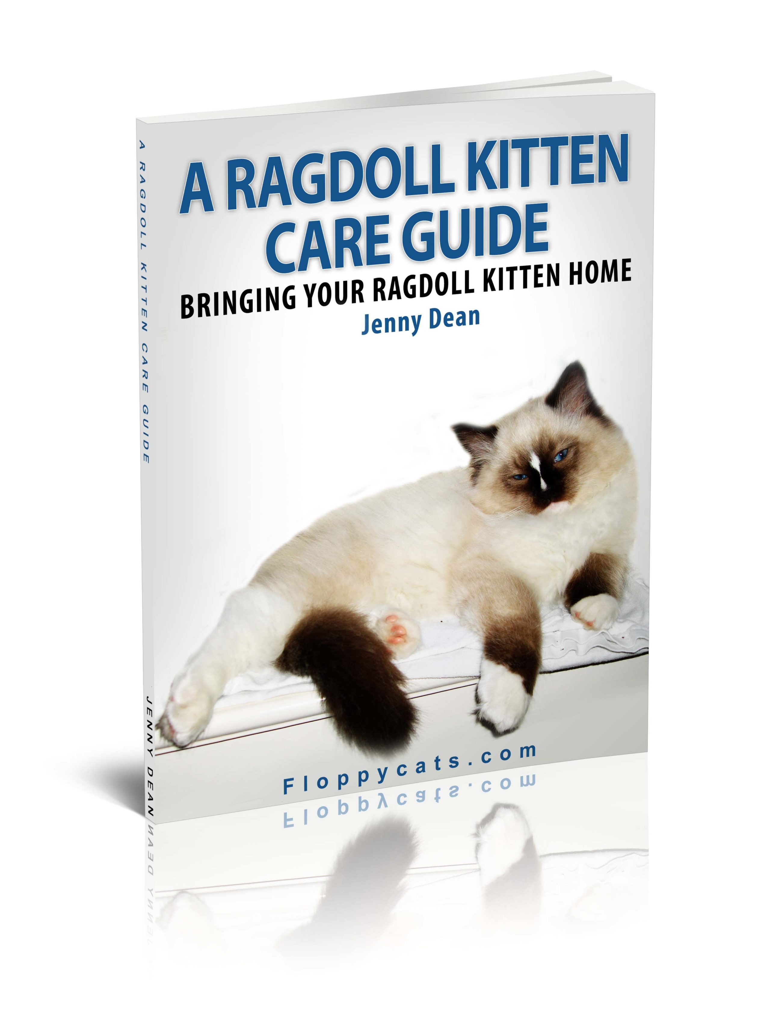 A Ragdoll Kitten Care Guide: Bringing Your Ragdoll Kitten Home October 2012