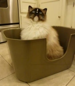 Charlie in NVR Miss Litterbox