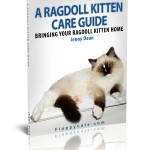 FREE eBook Copy of A Ragdoll Kitten Care Guide!
