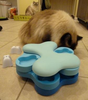 Nina Ottosson Dog Tornado Cat Puzzle Toy Review