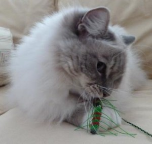 Trigg with Neko Flies Cat Toy Kattipede