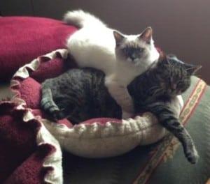 Kelchi and Moshie wrestle