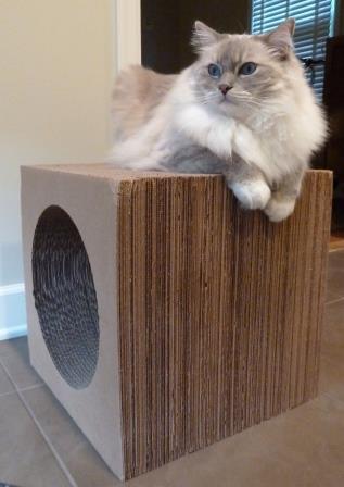 Ragdoll Cat Trigg on Karma Products Karma Kube Cardboard Cat Scratcher