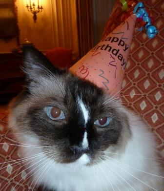Murphy Birthday Hat 2013