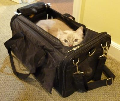 Sherpa Cat Carrier Ultimate Bag On Wheels Review