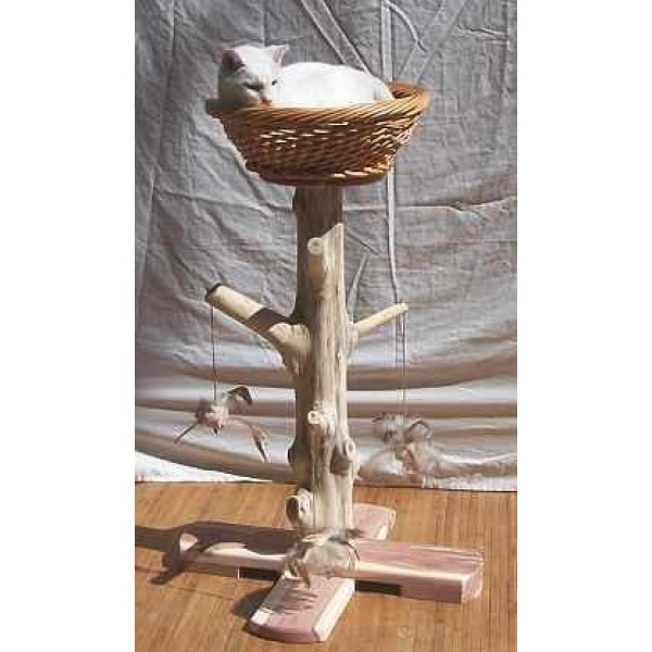 Cat Scratching Post additionally B002baxlxk together with Cats As Domestic Spectacle Outfitting The Modern Cat besides Who Said A Cat Tree Couldnt Look Like An Actual Tree together with What Is Teva Amoxicillin. on cat scratching pads for large cats