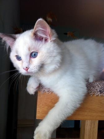 Gracie as a kitten