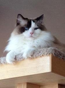 Josie on Cat Power Tower