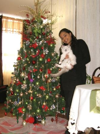 guest post by boris mom - Are Christmas Trees Poisonous To Cats