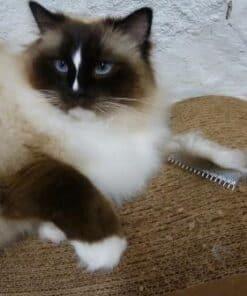 Safari Cat Comb and Charlie