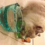 Online Pet Food Deals