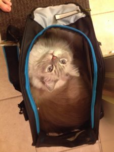 Trigg in the Bergan Voyager Cat Carrier