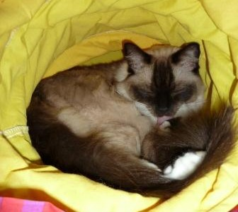 Cleaning Chemicals and Cats – What Do You Use or Not Use and Why?