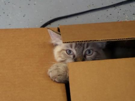 Ragdoll Kratos in a box