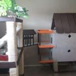 DIY Catification for Ragdoll Cats