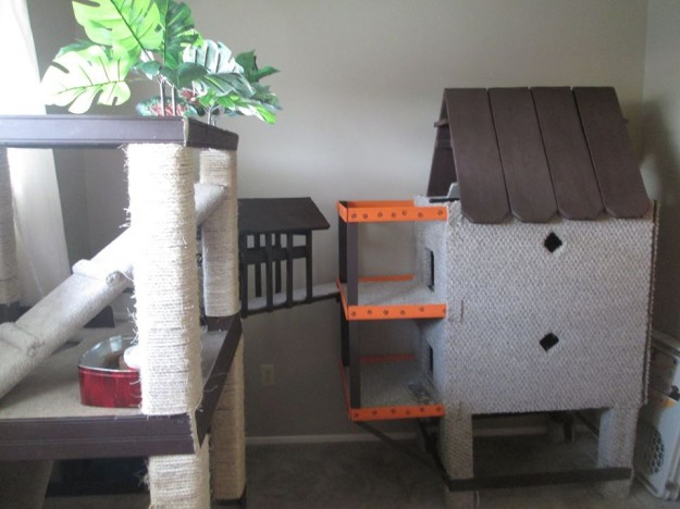 Ragdoll Cat Catification