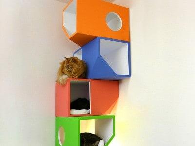 Catissa: Cat House