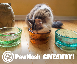 November 2014 Floppycats.com Giveaway: PawNosh Cubby Bowls