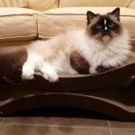 PetFusion Cat Scratcher Lounge Deluxe Product Review