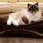PetFusion Cat Scratcher Lounge – Deluxe Review by Floppycats