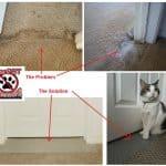 CarPET Scratch Stopper: Stop Cats from Scratching Carpet Around Doorways