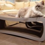 PetFusion Jumbo Cat Scratcher Lounge Product Review