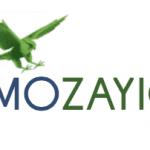 MOZAIC Wants Your Feline Films