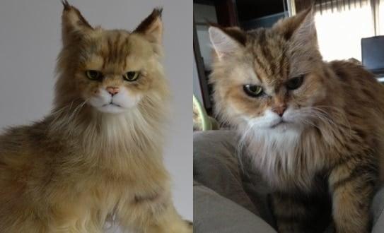 Custom Stuffed Plush Cats
