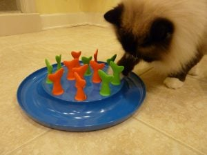 Petmate Jackson Galaxy Go Fish Cat Toy Cat Puzzle Toy Review - Floppycats