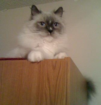 Quinn, way up high on top of closet