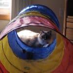 Summer Hot Deals Kids Play Tunnel Pop Up Playhouse Cat Tunnel?