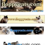 Happy 7th Birthday, Floppycats!