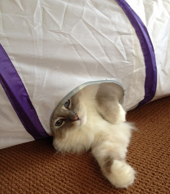 Pets Can Play Ultimate Cat Tunnel Product Review2