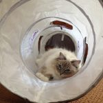 Pets Can Play Ultimate Cat Tunnel Product Review