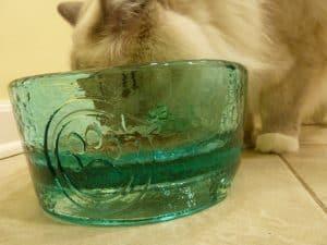 PawNosh Glass Pet Bowls Cubby Deluxe - How Deep Are the PawNosh Glass Pet Bowls - Floppycats