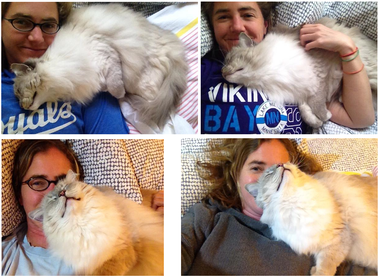 Snuggle With You: Does Your Cat Like To Snuggle With You?