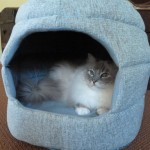 Urban Paw Jumbo Milo 2-in-1 Designer Cat Bed Product Review
