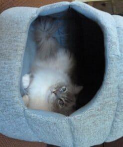 Trigg in the Urban Paw 2-in-1 Milo Pet Hut in Fur