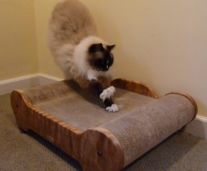 Brawny Cat Big Sleeky Comfort Throne Product Review Charlie Scratching