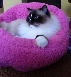 Charlie in Urban Paw Pet Bed