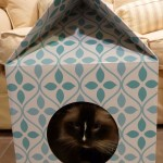 Petbo Designer Cat Playhouse Product Review