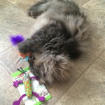 Petstages Madcap Cat Toys Giveaway Reports Back!