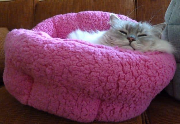 Trigg in Urban Paw Pet Bed Luna Ortho Cuddler in Sherpa Fuschia