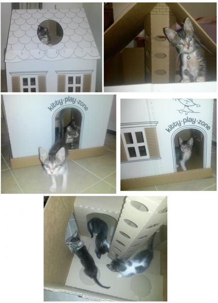 Kitty Play Zone Cardboard Cat Playhouse Giveaway Winner Reports Back 5