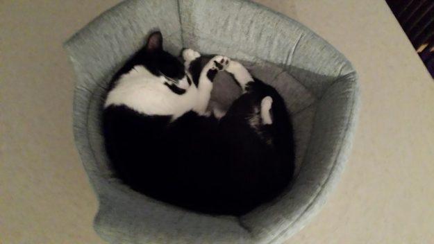 Sundae in Pumpkin in Urban Paw Milo 2-in-1 Cat Bed