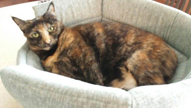Pumpkin in Urban Paw Milo 2-in-1 Cat Bed