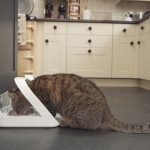 Cat Feeder: The SureFeed Microchip Pet Feeder from SureFlap